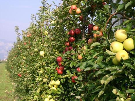 Fondo Euregio finanzia ricerca su biodiversità e mele | Fondazione Mach | Scoop.it