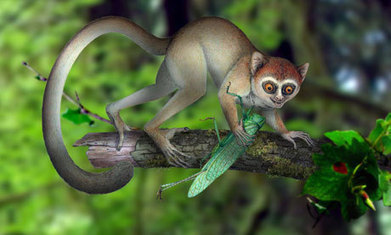 Tiny, insect-eating animal becomes earliest known primate | BIOSCIENCE NEWS | Scoop.it