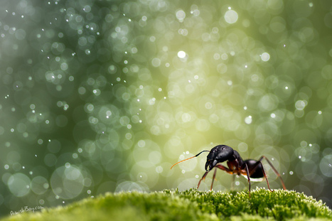 Macro photography tips and resources for beginners - Make your ideas Art   Machinimania   Scoop.it