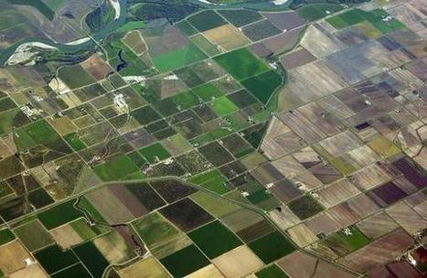 WHERE ARE THE TREES? Razing the land of natural life for Agricultural Linear Patchwork Quilts SLIDESHOW | Africa and Beyond | Scoop.it
