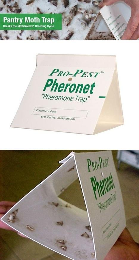 Pantry Moth Pheromone Traps | Backyard Gardening | Scoop.it