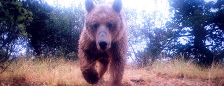 Working to conserve carnivores in Georgia   Saving the Wild: Nature Conservation in the Caucasus   Scoop.it