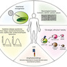 Cancer Immunotherapy Review