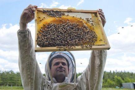 De nouvelles pratiques en faveur des pollinisateurs | DEPnews développement personnel | Scoop.it