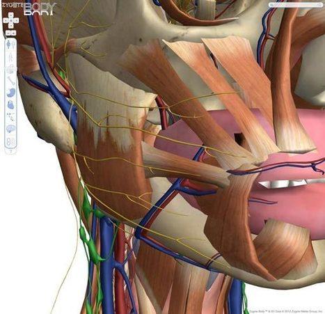 Explorer le corps humain directement depuis son navigateur | Dev-web2 | Scoop.it
