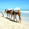 Tourisme et voyages