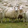 Shearing Equipment