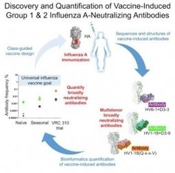 GRIPPE : Toujours sur la piste du vaccin universel… – Cell | Scientific Innovations in Biology | Scoop.it