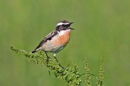 Atlas des oiseaux nicheurs: appel à collaboration - SVSN | Sauvegarde et Protection des animaux | Scoop.it
