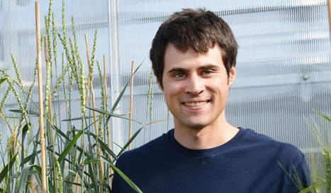Scientists discover perennial hybrid of wheat, wheatgrass | Grain du Coteau : News ( corn maize ethanol DDG soybean soymeal wheat livestock beef pigs canadian dollar) | Scoop.it