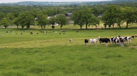 Des vaches étudiées à la loupe à l'Inra du Pin | Les techniques, l'innovation, la recherche, l'économie et la commercialisation en agriculture | Scoop.it