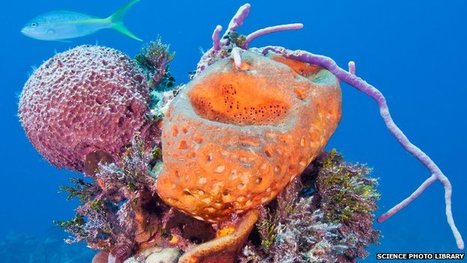 Sponges solve coral reef mystery | All about water, the oceans, environmental issues | Scoop.it