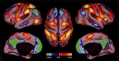 La Théorie Sensorielle|L'énergie noire du cerveau | Les Curiosités de Christine | Scoop.it