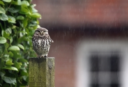 New Statesman | Labour accidentally tweets promise to give everyone an owl | Social1 | Scoop.it