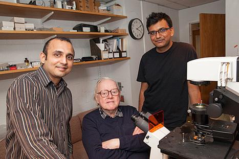 New rotary motor found in Flavobacterium johnsoniae | Amazing Science | Scoop.it