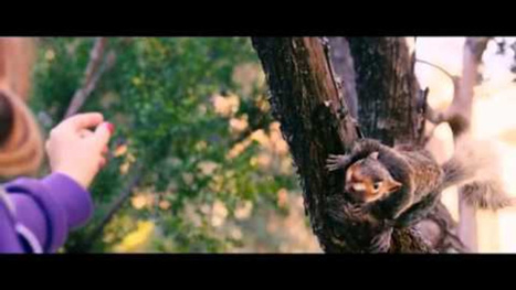 Timur Bekmambetov is making a movie about flesh-eating squirrels | Strange days indeed... | Scoop.it