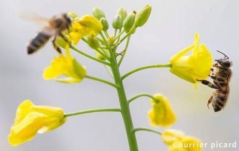 De nouveaux pesticides interdits - Courrier Picard | pesticides : un vrai cancer social ? | Scoop.it