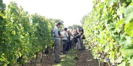 Gers : l'enjeu du tourisme des vignes et des chais | Route des vins | Scoop.it