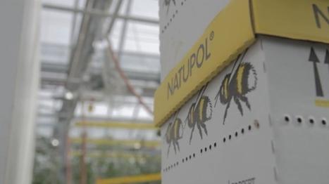 La première serre commerciale sur un toit de Montréal, et à Paris ? | Nature et urbanisme | Scoop.it