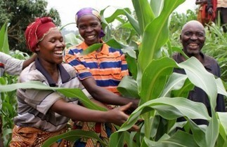 Growth with inclusion, a four point plan for Africa | Abdoulaye Mar Dieye | UNDP | A Better Food System | Scoop.it