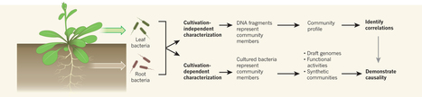 Microbiomes: Curating communities from plants : Nature : Nature Publishing Group | Plant Genetics, NGS and Bioinformatics | Scoop.it