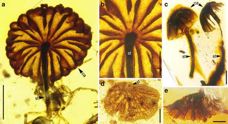 mosca parásita más antigua en ámbar