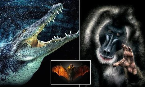 Stunning photos of wild animals look like they were taken in a studio | Everything Photographic | Scoop.it