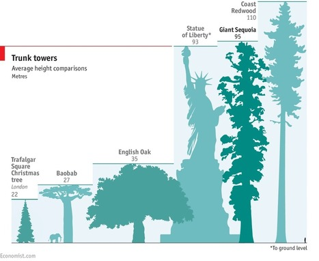 Seqouiadendron Giganteum: Climbing the world's biggest tree | The Economist | Erba Volant - Applied Plant Science | Scoop.it