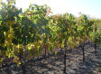 Will Napa Valley Be Able To Produce Wine In 30 Years?   Climate change challenges   Scoop.it