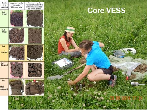 L'évaluation visuelle de structure du sol (VESS) avec l'échelle des mottes CoreVESS | SPATEN   Test Bêche | Scoop.it