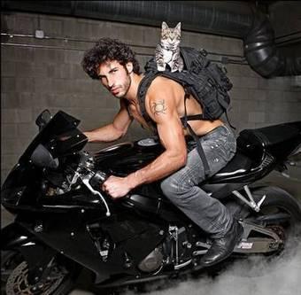 Hunky Cat Men | Strange days indeed... | Scoop.it