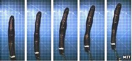 Pentagon builds 'worm warrior' | VI Tech Review (VITR) | Scoop.it