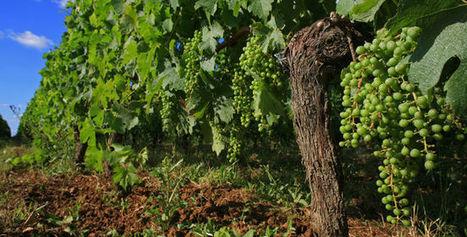 Le groupe coopératif InVivo se lance dans le vin - Le Figaro Vin   Le Vin en Grand - Vivez en Grand ! www.vinengrand.com   Scoop.it