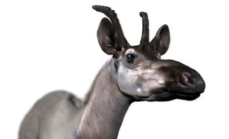 Una nueva especie ayuda a entender la evoluci&o...
