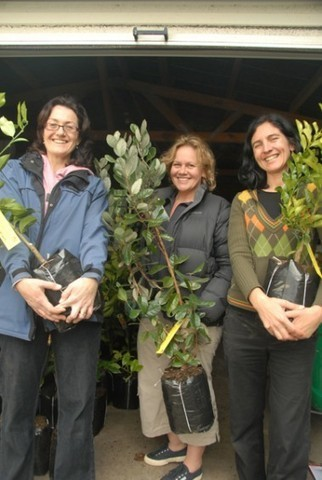 1000 free fruit trees for Auckland, free and fresh fruit for communities | ECONOMIES LOCALES VIVANTES | Scoop.it