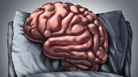 Brain-fade? Your neurons might be taking a powernap | The future of medicine and health | Scoop.it