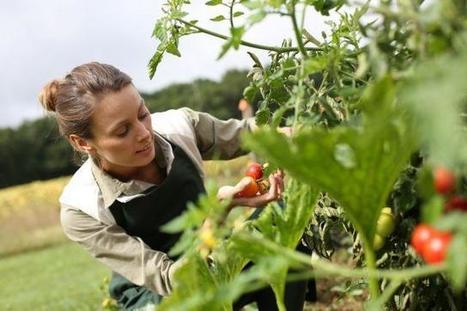 43% des Français produisent leurs propres aliments | Villes en transition | Scoop.it