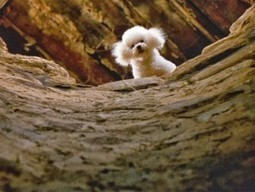 Script Tip: Pets in Movies - How Can a Pet Improve Your Characters and Plot? - Script Magazine | writing | Scoop.it