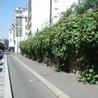 Biodiversité en ville : Outils et mise en oeuvre opérationnelle