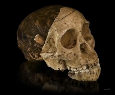 Nos ancêtres auraient fabriqué des outils beaucoup plus tôt que prévu | Archeology on the Net | Scoop.it