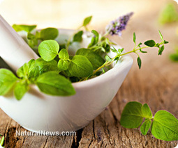Herbal medicine helps heal the nervous system | Plant Based Nutrition | Scoop.it