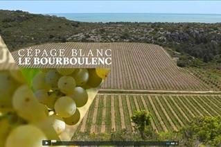 La Clape, île de vins et de miel - en vidéo | Le vin quotidien | Scoop.it