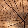 ZenStorming - Design Raining Innovation