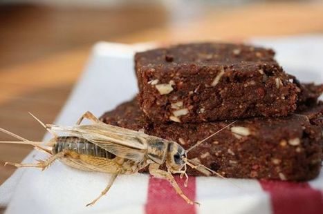 Ground-up CRICKETS used to make super-healthy high protein snack bars | Entomophagy: Edible Insects and the Future of Food | Scoop.it