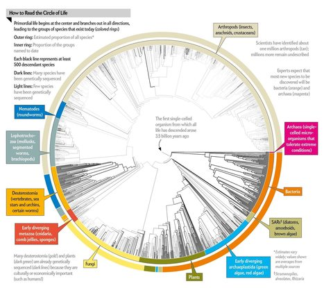 All 2.3 Million Species Are Mapped into a Single Circle of Life | Navigate | Scoop.it