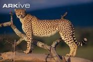 Mammals - videos, photos and facts - ARKive | All about nature | Scoop.it