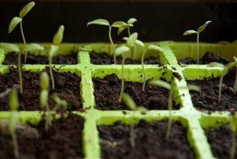 Calendrier de semis de légumes | Espace pour la vie | Code Planète | Scoop.it