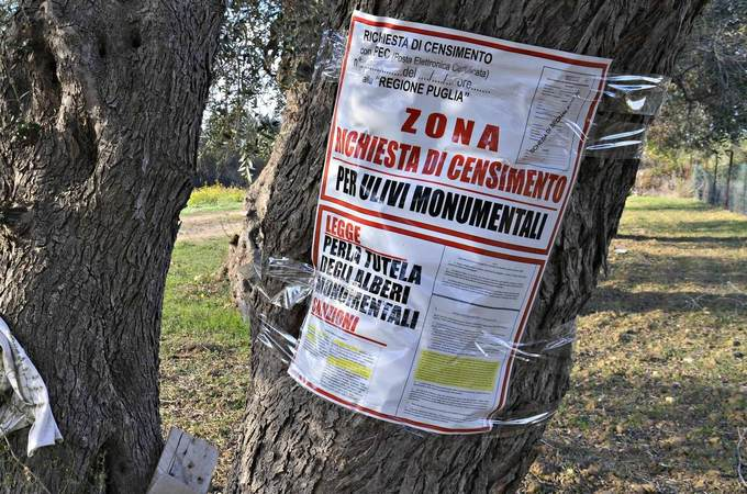 Puglia Mandates Pesticides In Fight Against Xylella, Sparking Protests
