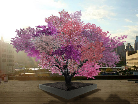 The Gift Of Graft: New York Artist's Tree To Grow 40 Kinds Of Fruit | Erba Volant - Applied Plant Science | Scoop.it