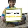 MGT 325 ASH Course Tutorial(mgt325.com)